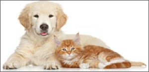 PROFESSIONAL PET STAIN AND ODOR CLEANING WOODBRIDGE VA | STAIN AND ODOR REMOVAL | DEODORIZING